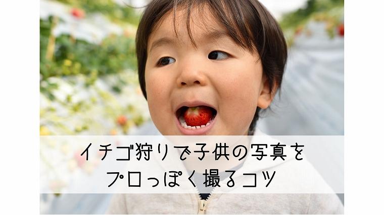 イチゴ狩りの子供写真のコツ